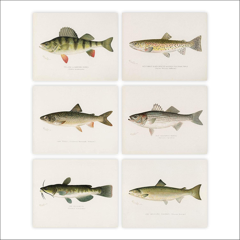Fish Wall Art Prints